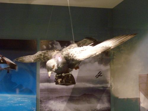 22 – D.T.M. – Il piccione paparazzo