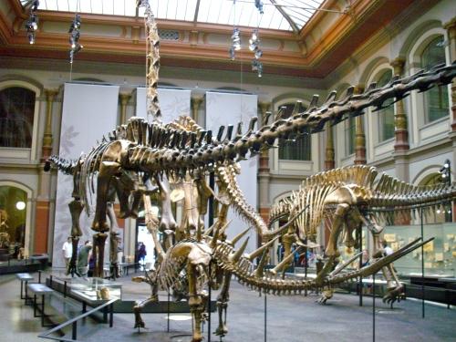 26 – Il Brachiosauro al Museo di Storia Naturale